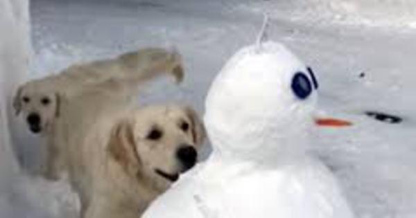 3段重ねの大きな雪だるま!2匹の愛犬があまりにも完成度が高いせいか、雪だるまを…