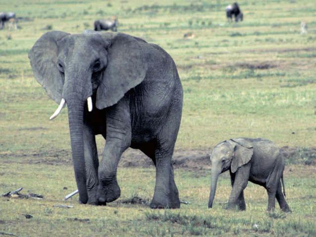 ゾウの赤ちゃんが、 鳥を追いかけて遊んでいると… とても可愛い光景が♡