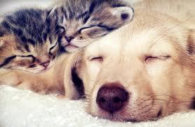 犬と猫、合計9万2478頭を対象に行われ、次のような結果が明らかに!!