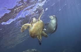 アザラシとウミガメ2頭の心温まるやり取りは、多くの人々の心を震わせた!!
