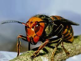 大きなハチを、上から紙コップをかぶせて捕獲!!次の瞬間・・・