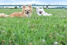 愛犬のお墓に、お参りに…すると、不思議な光景に目を奪われることに…!