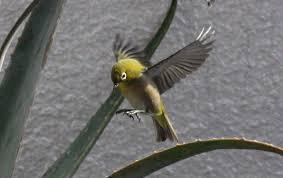 マンションで実際に起こった小さな物語…エントランスのガラスがあまりに透明で美しく、鳥には判別できず、ぶつかって怪我をしたのがきっかけで…